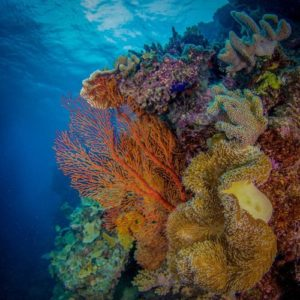 Colorful coral found on the Great Barrier Reef.